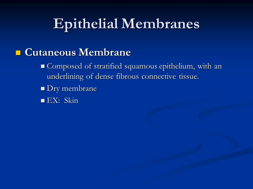 Epithelial Membranes Cutaneous Membrane Composed of stratified squamous epithelium, with an underlining of dense fibrous connective tissue. Dry membra
