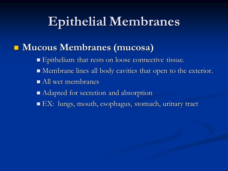 Mucous Membranes (mucosa) Epithelium that rests on loose connective tissue. Membrane lines all body cavities that open to the exterior. All wet membra