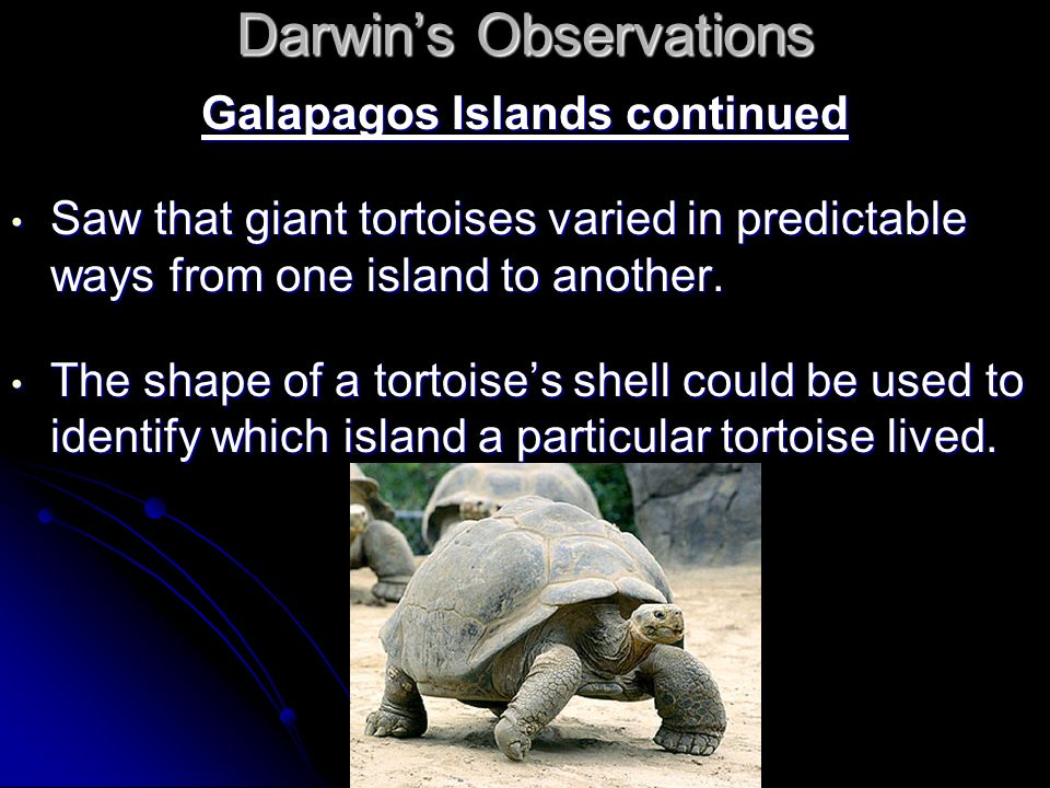 Darwins Observations Galapagos Islands continued Saw that giant tortoises varied in predictable ways from one island to another. Saw that giant tortoi