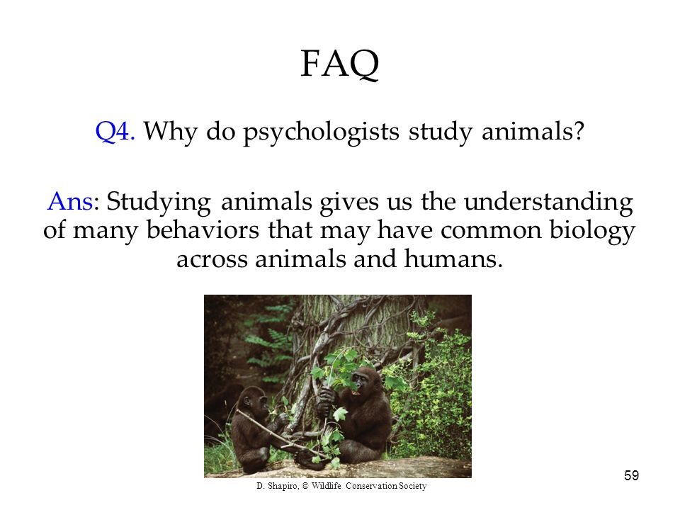 59 FAQ Q4. Why do psychologists study animals? Ans: Studying animals gives us the understanding of many behaviors that may have common biology across