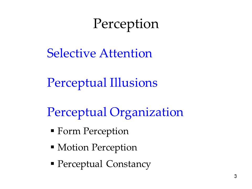 3 Perception Selective Attention Perceptual Illusions Perceptual Organization Form Perception Motion Perception Perceptual Constancy