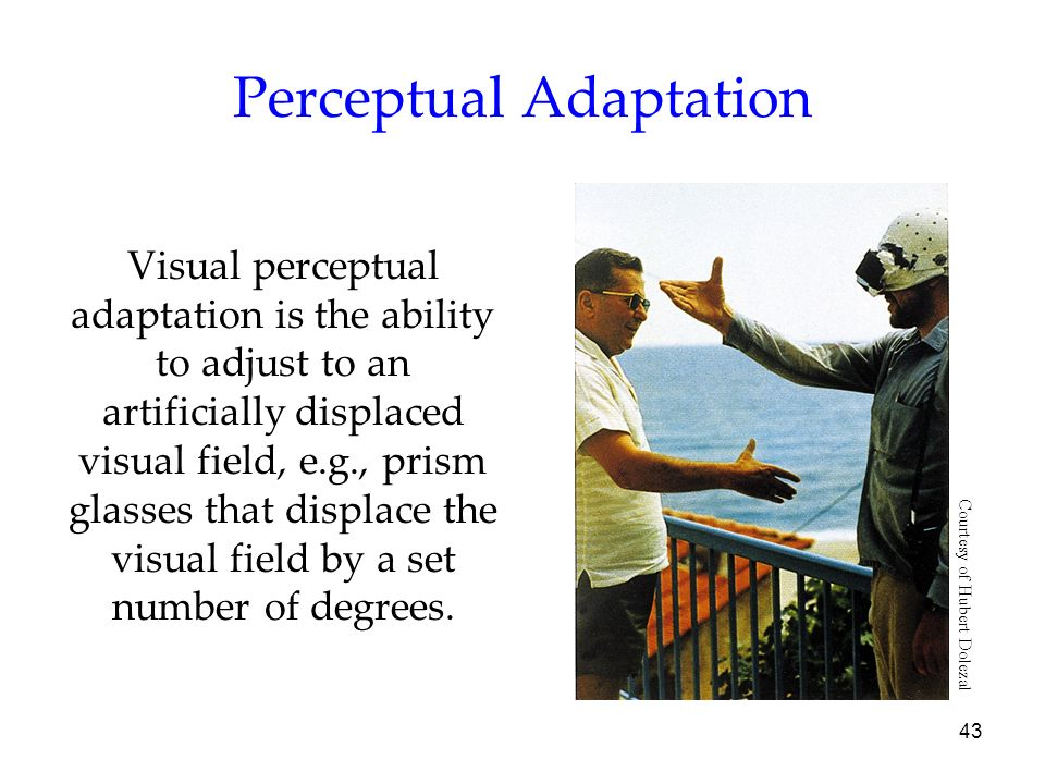 43 Perceptual Adaptation Visual perceptual adaptation is the ability to adjust to an artificially displaced visual field, e.g., prism glasses that dis