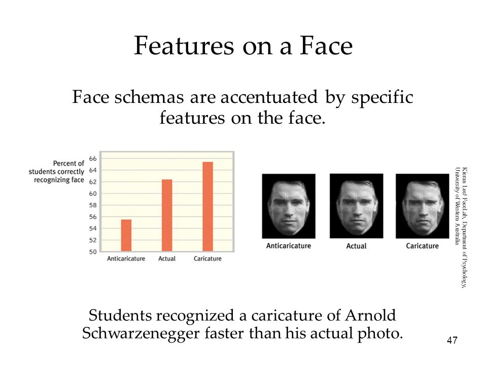 47 Students recognized a caricature of Arnold Schwarzenegger faster than his actual photo. Features on a Face Face schemas are accentuated by specific