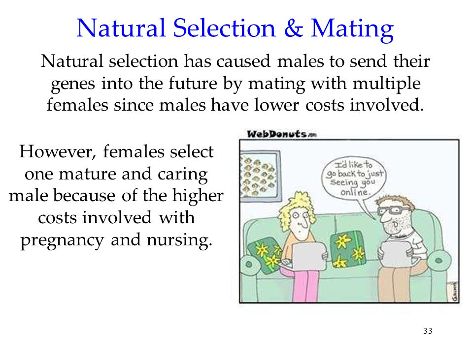 33 Natural Selection & Mating Natural selection has caused males to send their genes into the future by mating with multiple females since males have