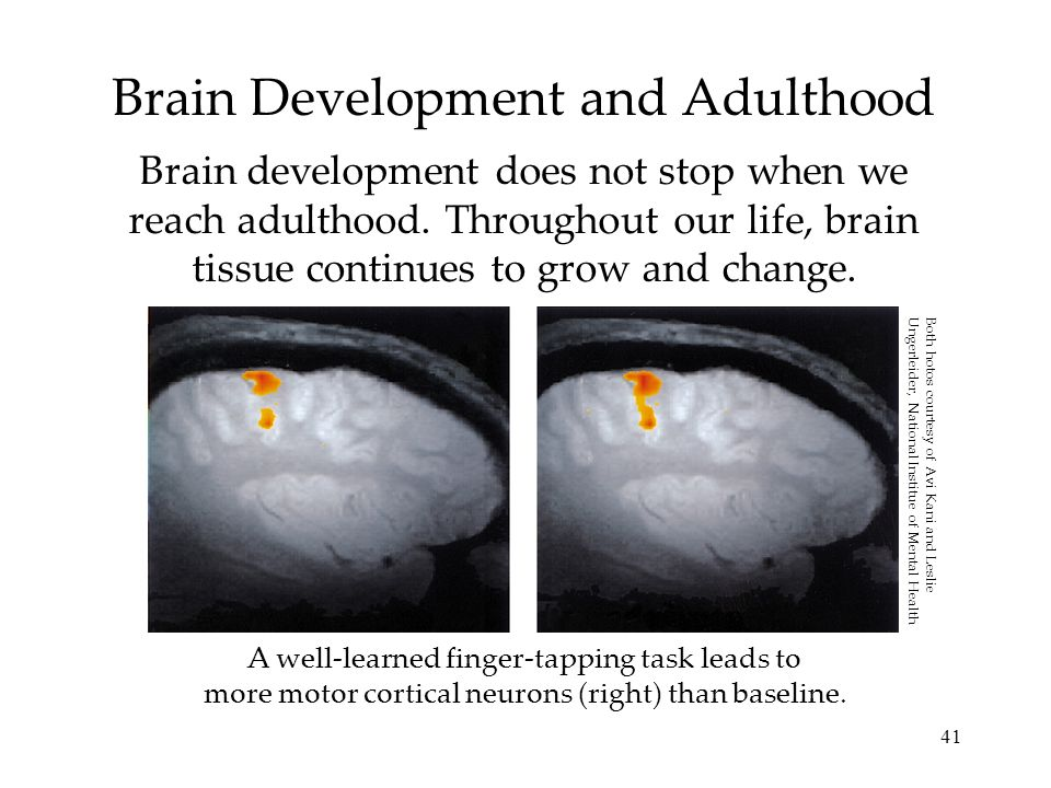41 Brain Development and Adulthood Brain development does not stop when we reach adulthood. Throughout our life, brain tissue continues to grow and ch