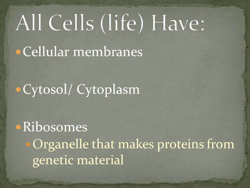 Cellular membranes Cytosol/ Cytoplasm Ribosomes Organelle that makes proteins from genetic material