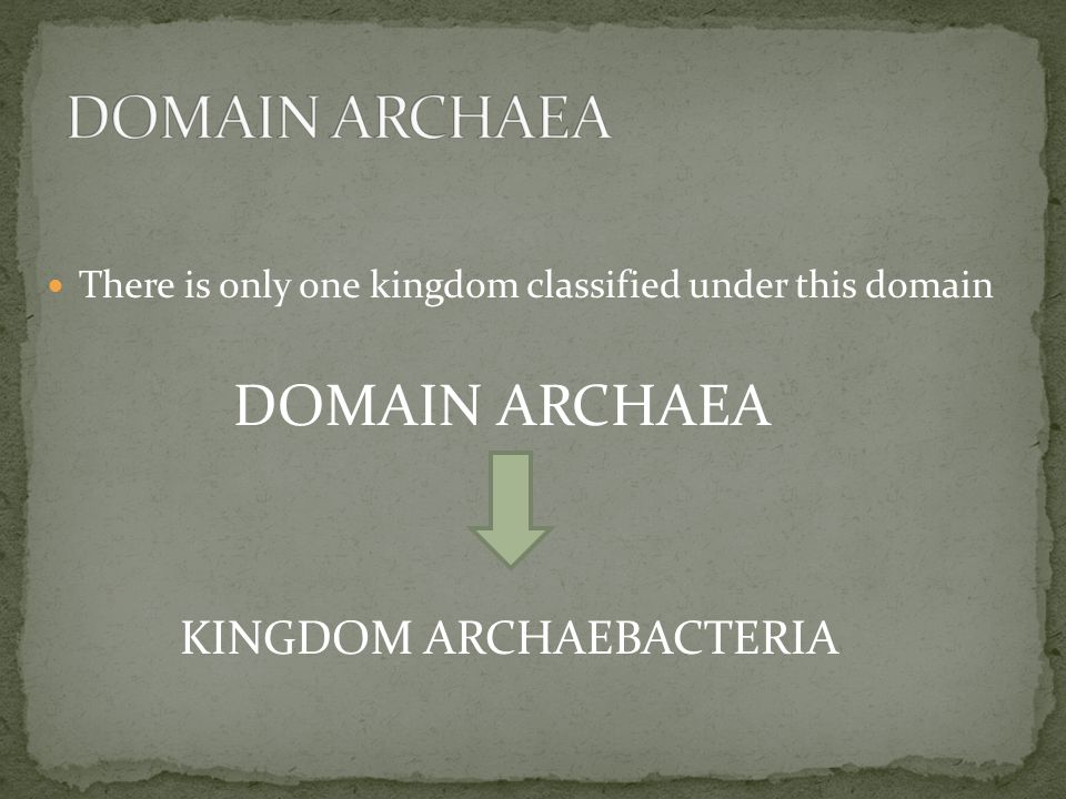 There is only one kingdom classified under this domain DOMAIN ARCHAEA KINGDOM ARCHAEBACTERIA