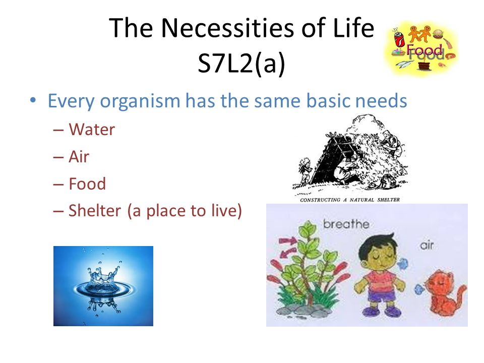 The Necessities of Life S7L2(a) Every organism has the same basic needs – Water – Air – Food – Shelter (a place to live)