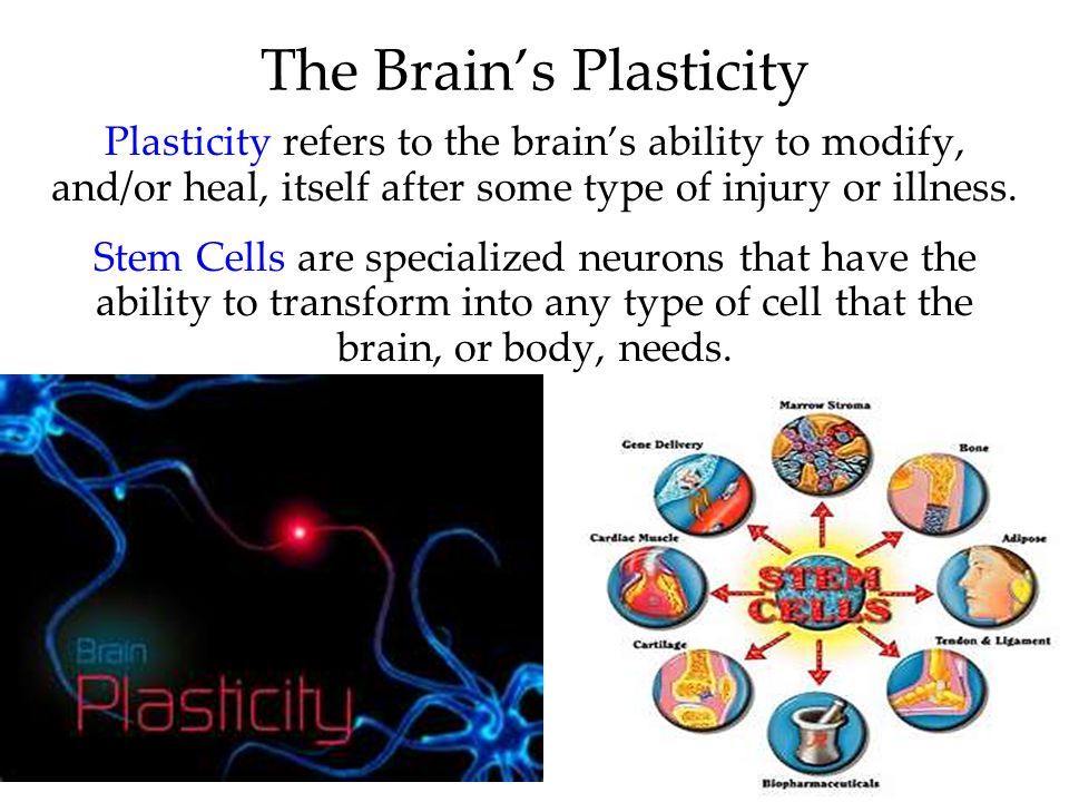 67 Plasticity refers to the brains ability to modify, and/or heal, itself after some type of injury or illness. Stem Cells are specialized neurons tha