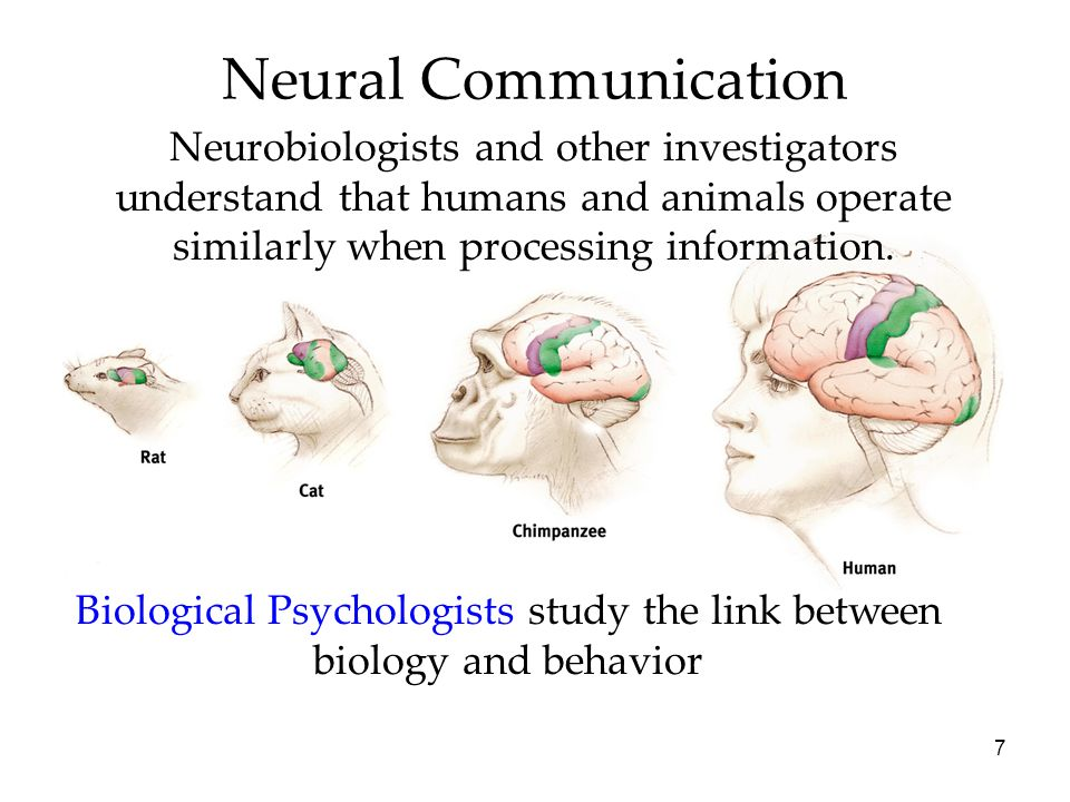 7 Neural Communication Biological Psychologists study the link between biology and behavior Neurobiologists and other investigators understand that hu