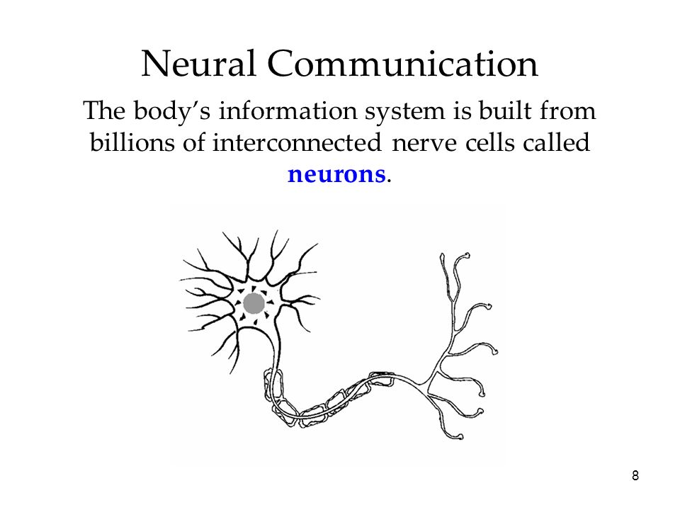 8 Neural Communication The bodys information system is built from billions of interconnected nerve cells called neurons.