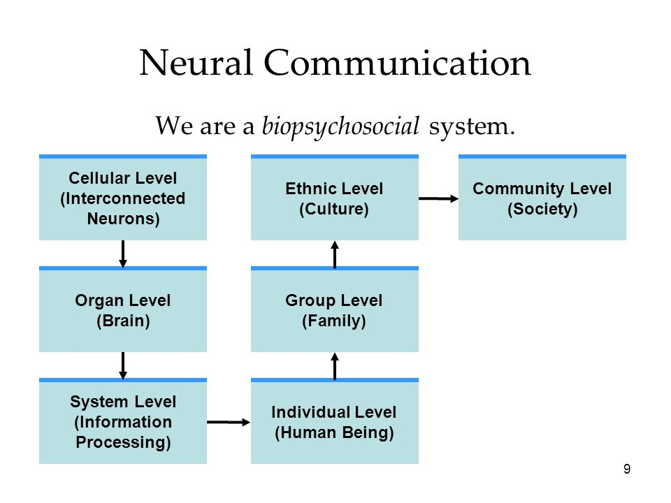 9 Neural Communication We are a biopsychosocial system. Cellular Level (Interconnected Neurons) Organ Level (Brain) System Level (Information Processi