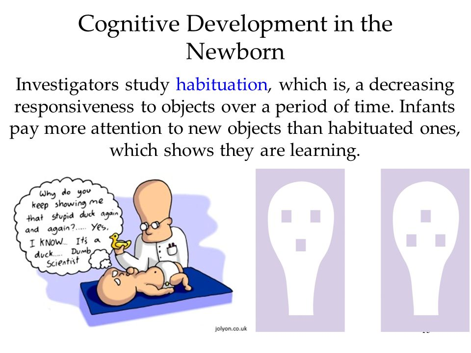 13 Cognitive Development in the Newborn Investigators study habituation, which is, a decreasing responsiveness to objects over a period of time. Infan