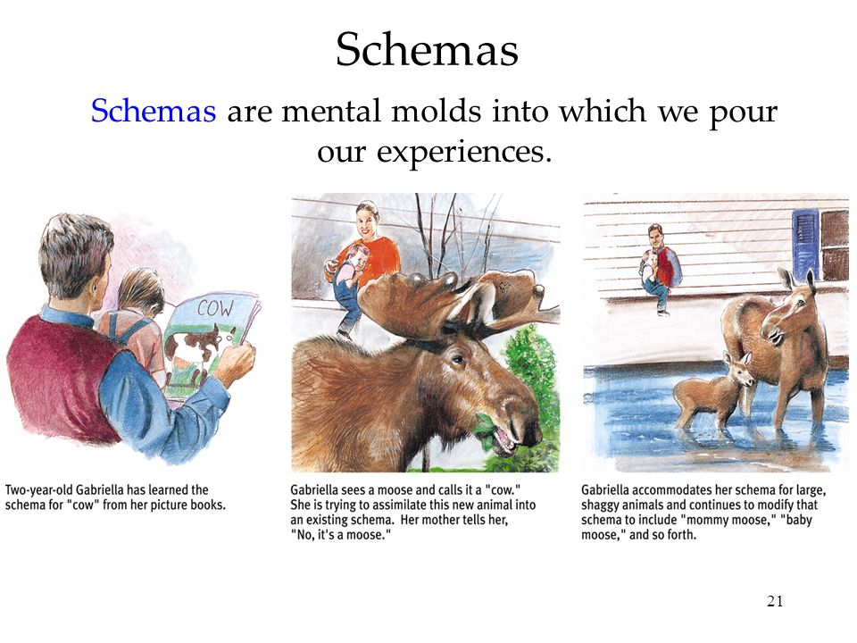 21 Schemas Schemas are mental molds into which we pour our experiences.
