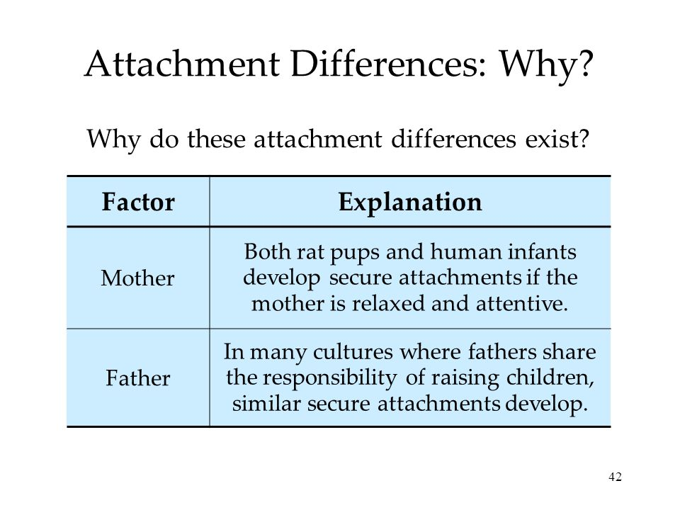 42 Attachment Differences: Why? Why do these attachment differences exist? FactorExplanation Mother Both rat pups and human infants develop secure att