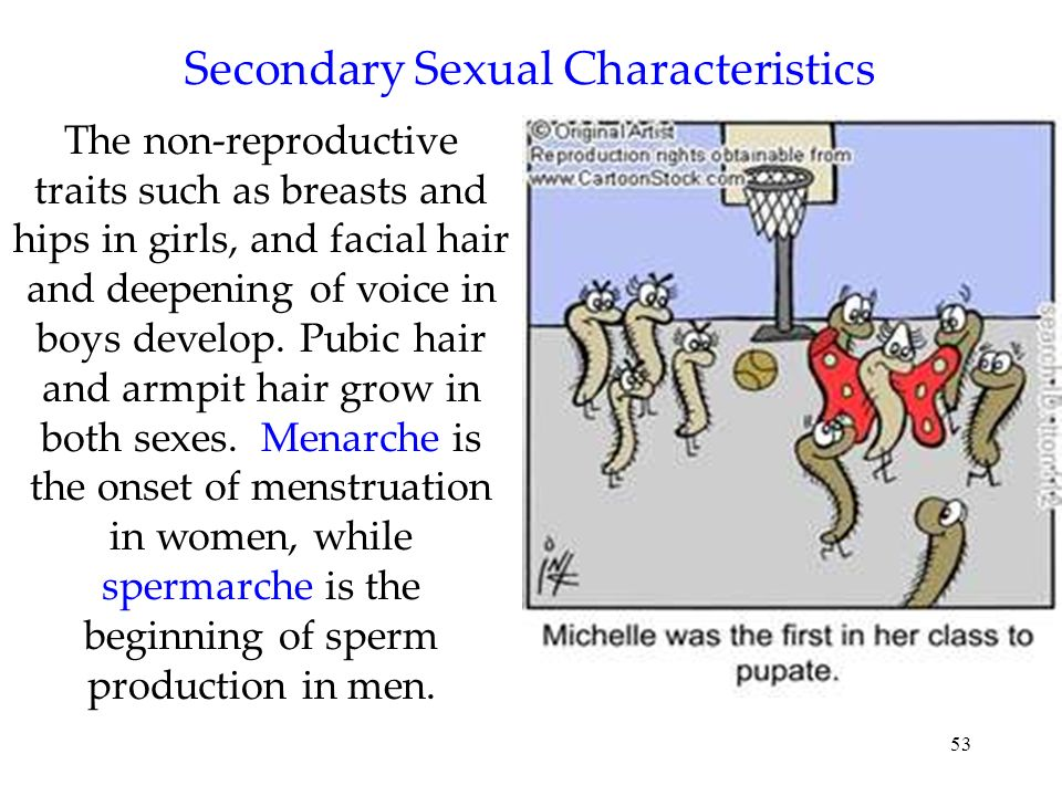 53 Secondary Sexual Characteristics The non-reproductive traits such as breasts and hips in girls, and facial hair and deepening of voice in boys deve