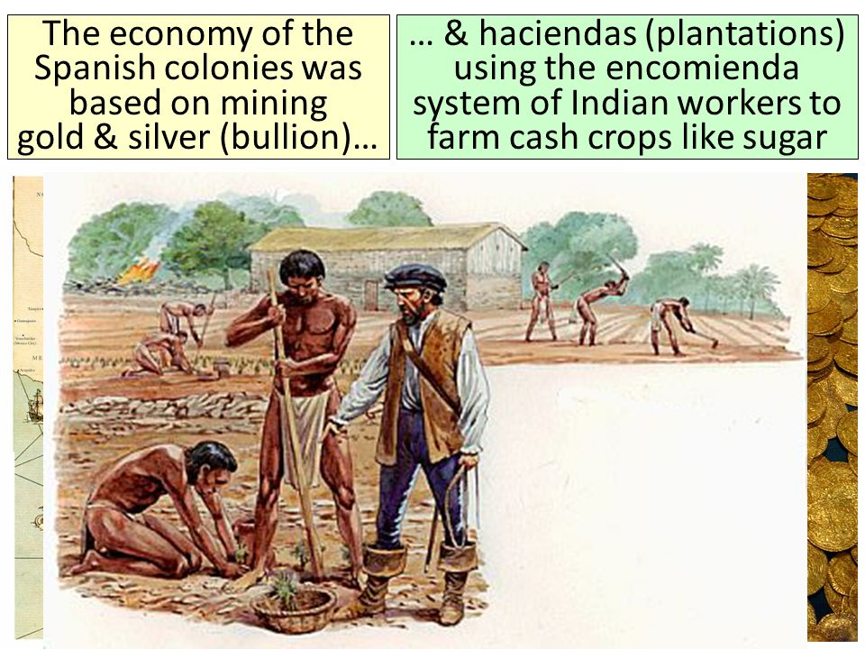 … & haciendas (plantations) using the encomienda system of Indian workers to farm cash crops like sugar The economy of the Spanish colonies was based on mining gold & silver (bullion)…