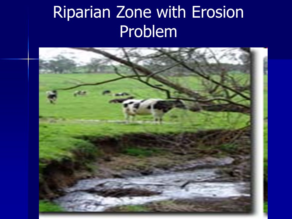 Riparian Zone with Erosion Problem