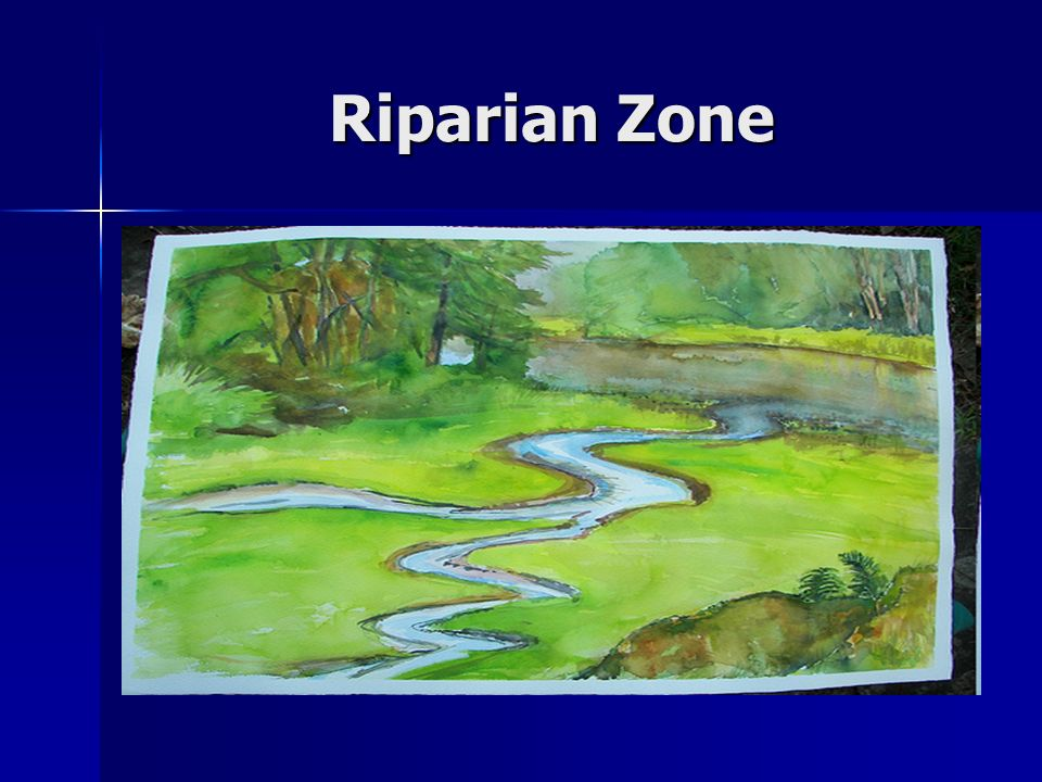 What is a Riparian Zone.