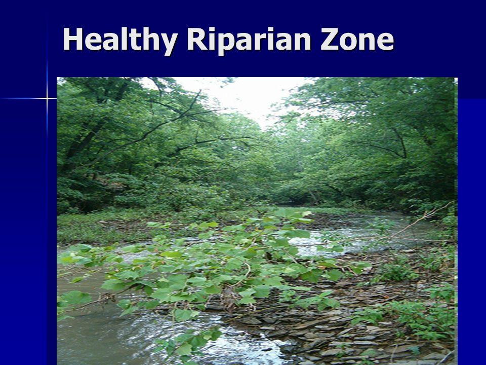 Healthy Riparian Zone