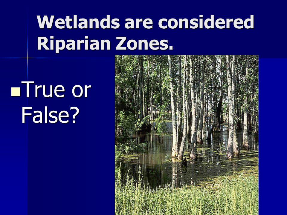 Wetlands are considered Riparian Zones. True or False True or False