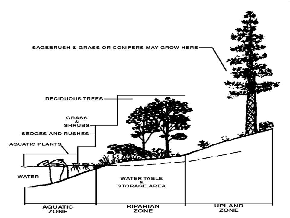 Threats to Riparian Zones Logging Logging Over grazing Over grazing Agriculture Agriculture Building Dams Building Dams Human Development Human Development