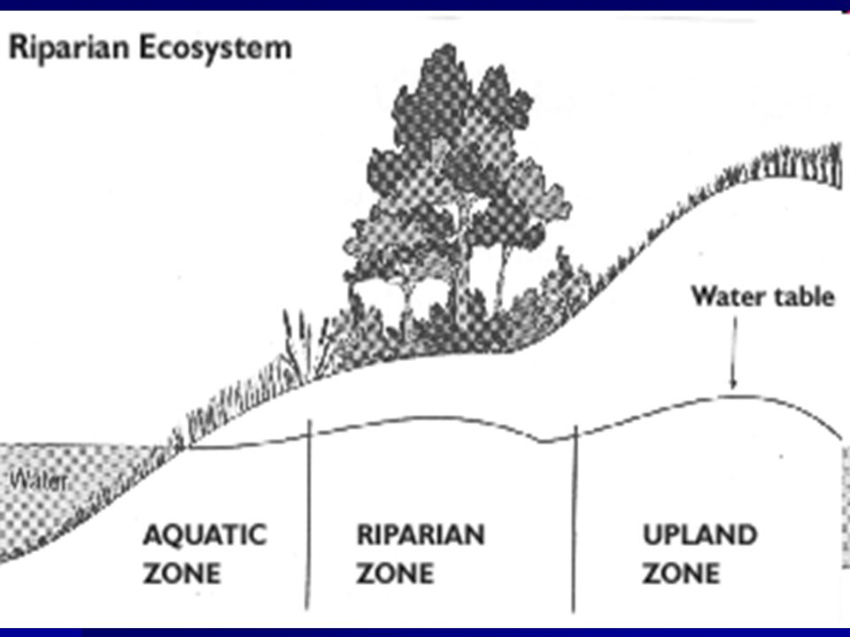 How Does a Healthy Stream and Riparian Zone Look.
