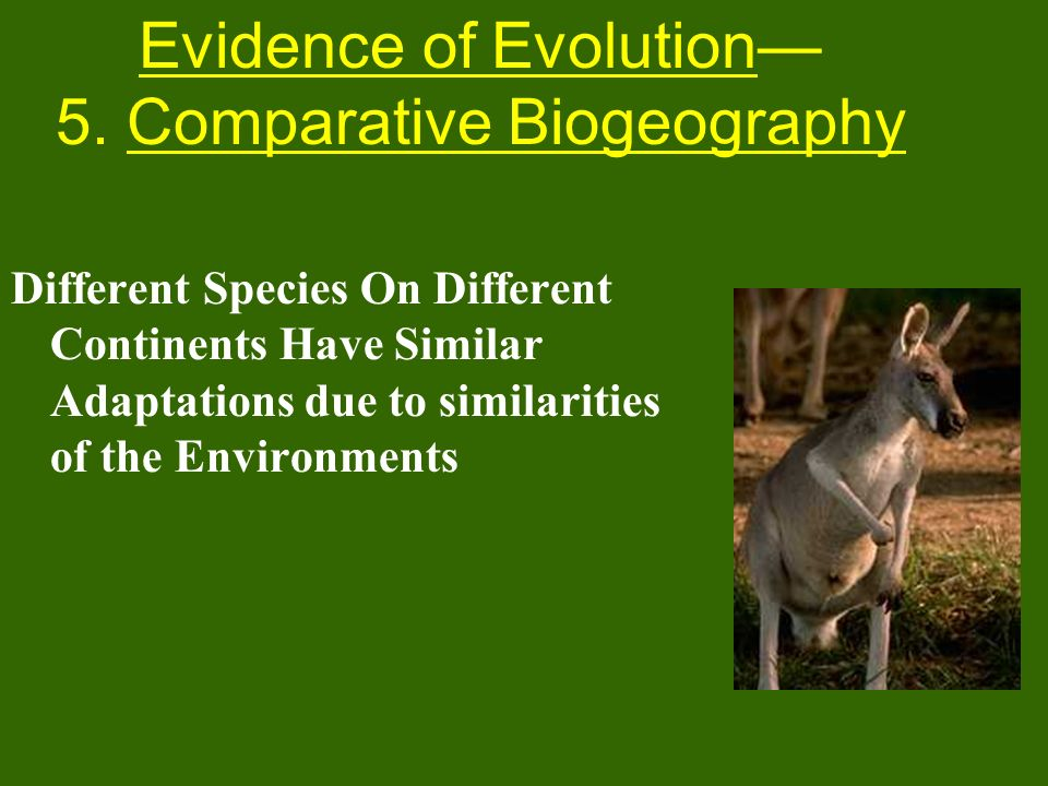 Different Species On Different Continents Have Similar Adaptations due to similarities of the Environments Evidence of Evolution 5. Comparative Biogeo