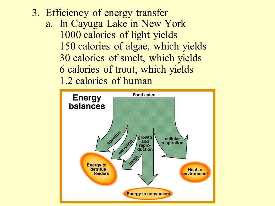 3. Efficiency of energy transfer a.In Cayuga Lake in New York 1000 calories of light yields 150 calories of algae, which yields 30 calories of smelt,