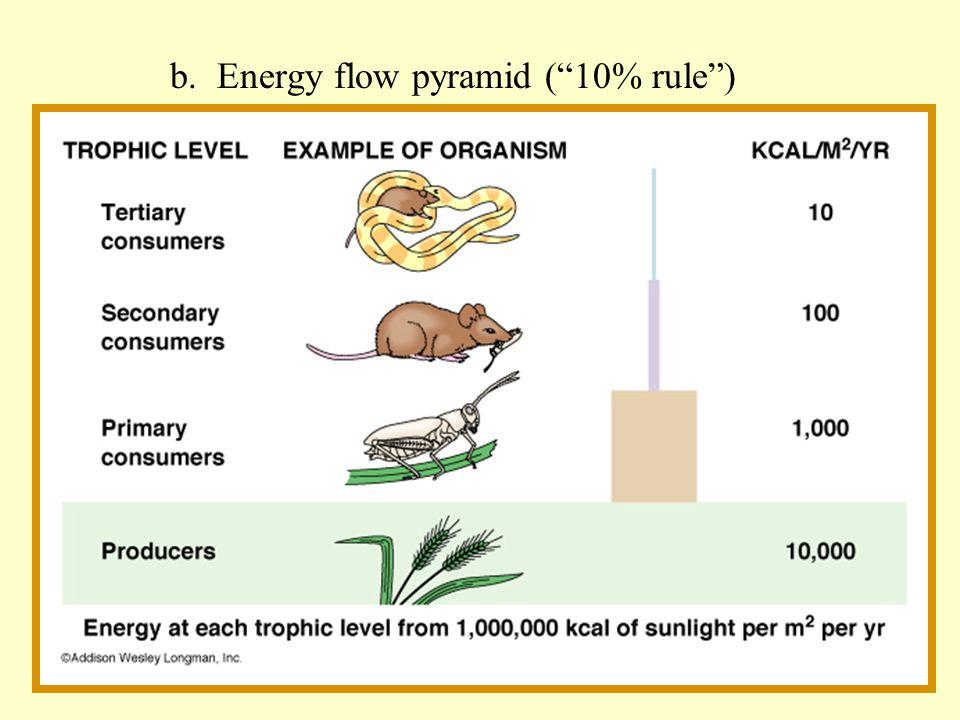 b. Energy flow pyramid (10% rule)