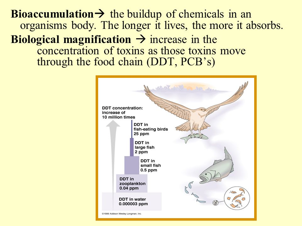 Bioaccumulation the buildup of chemicals in an organisms body. The longer it lives, the more it absorbs. Biological magnification increase in the conc