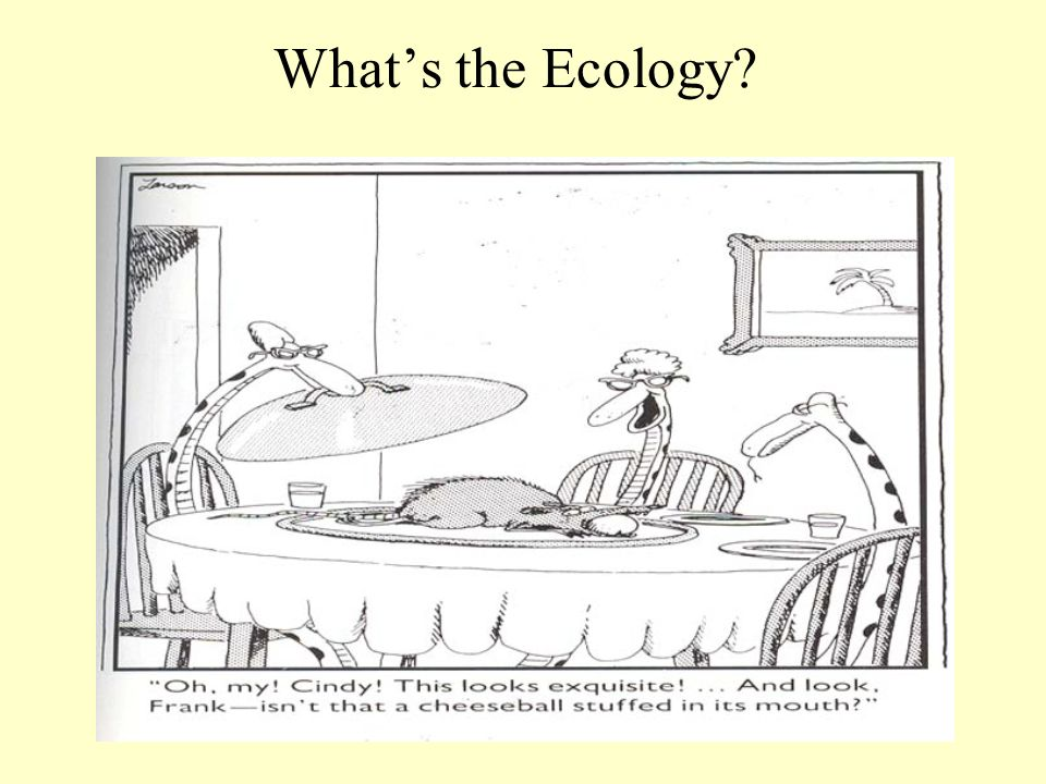 Whats the Ecology?