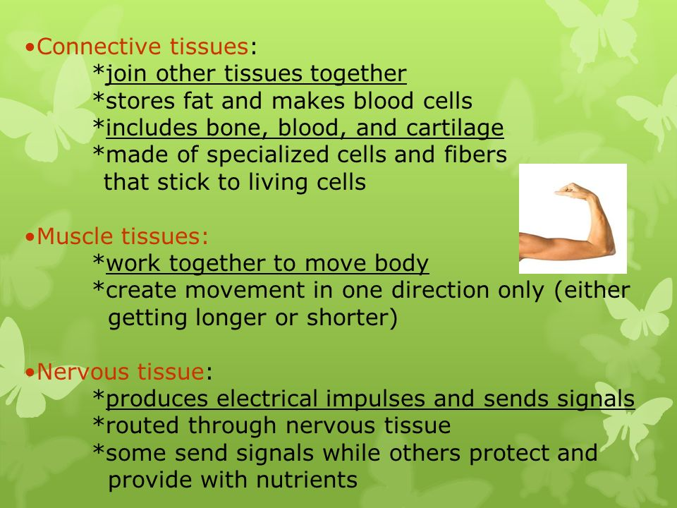 Connective tissues: *join other tissues together *stores fat and makes blood cells *includes bone, blood, and cartilage *made of specialized cells and