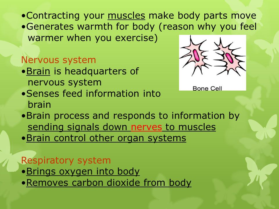 Contracting your muscles make body parts move Generates warmth for body (reason why you feel warmer when you exercise) Nervous system Brain is headqua