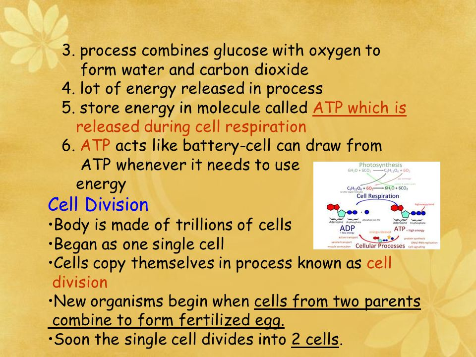 2. By products are oxygen, which plant releases into air, and a molecule called glucose. Glucose 1. High energy material that is classified as sugar 2