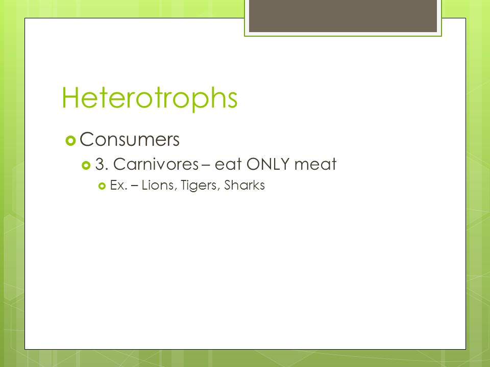 Heterotrophs Consumers 3. Carnivores – eat ONLY meat Ex. – Lions, Tigers, Sharks