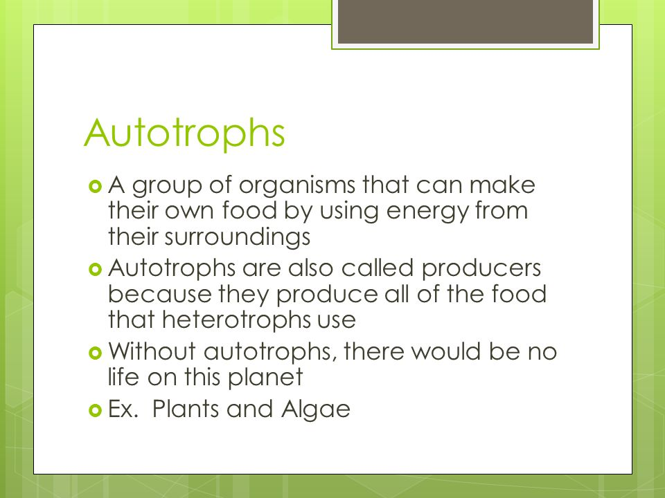 Autotrophs A group of organisms that can make their own food by using energy from their surroundings Autotrophs are also called producers because they