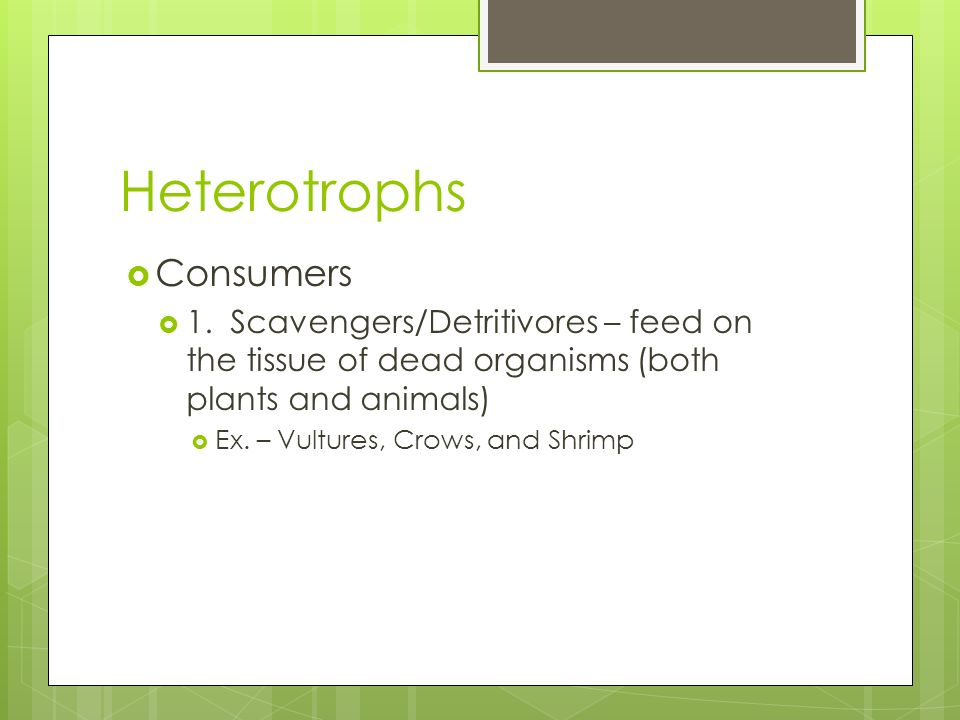 Heterotrophs Consumers 1. Scavengers/Detritivores – feed on the tissue of dead organisms (both plants and animals) Ex. – Vultures, Crows, and Shrimp