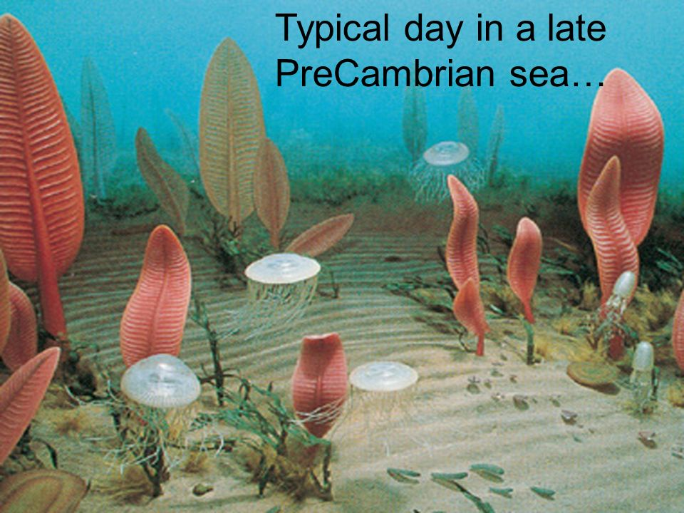Typical day in a late PreCambrian sea…