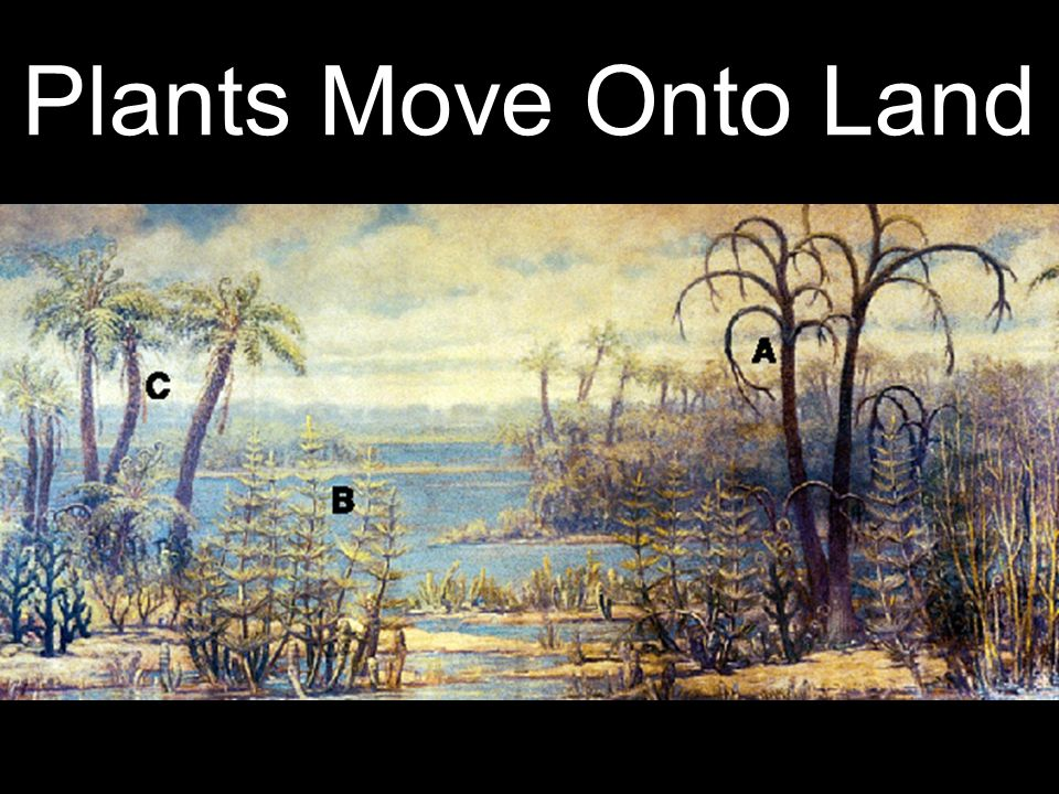 Plants Move Onto Land