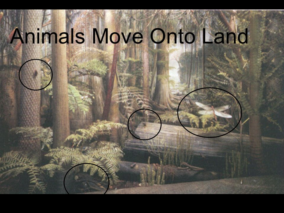 Animals Move Onto Land