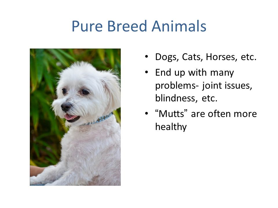 Pure Breed Animals Dogs, Cats, Horses, etc.