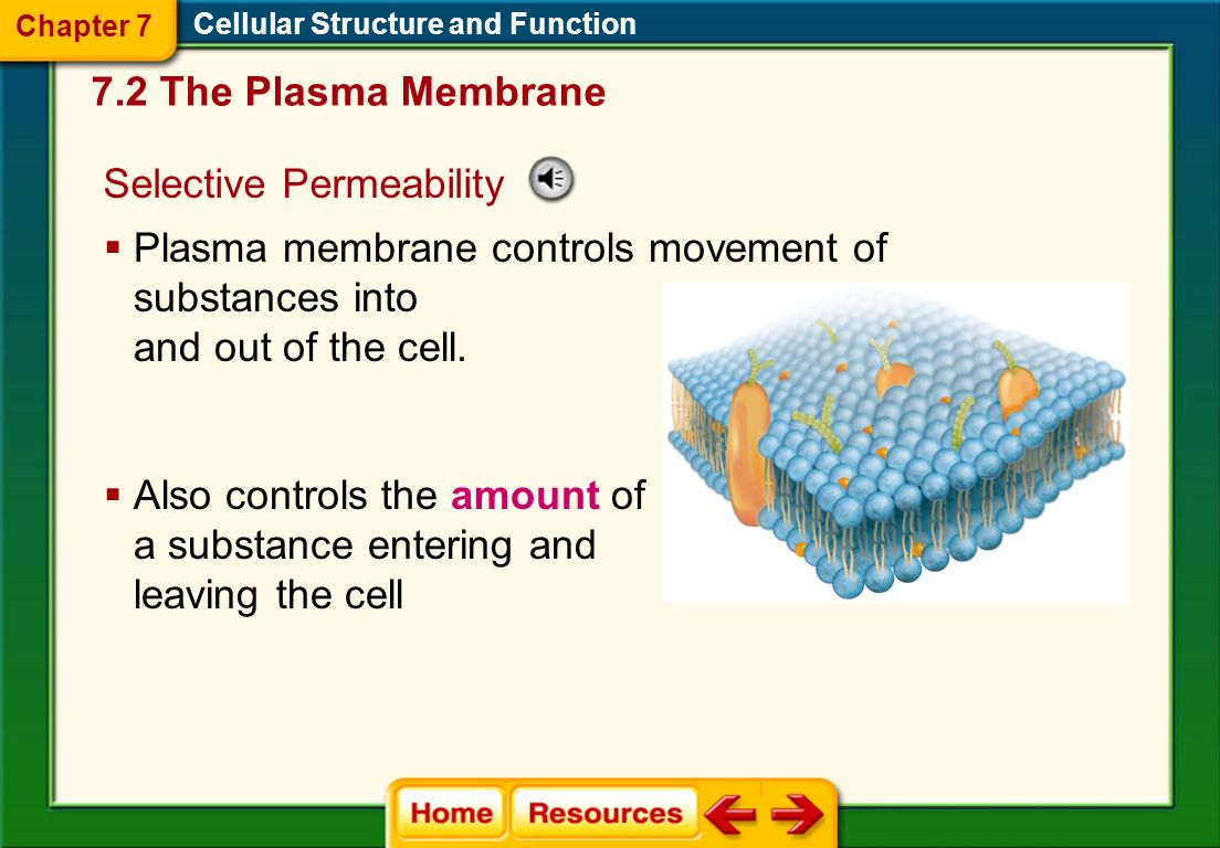 Plasma Membrane Thin, flexible boundary between the cell and its environment 7.2 The Plasma Membrane Cellular Structure and Function Allows nutrients