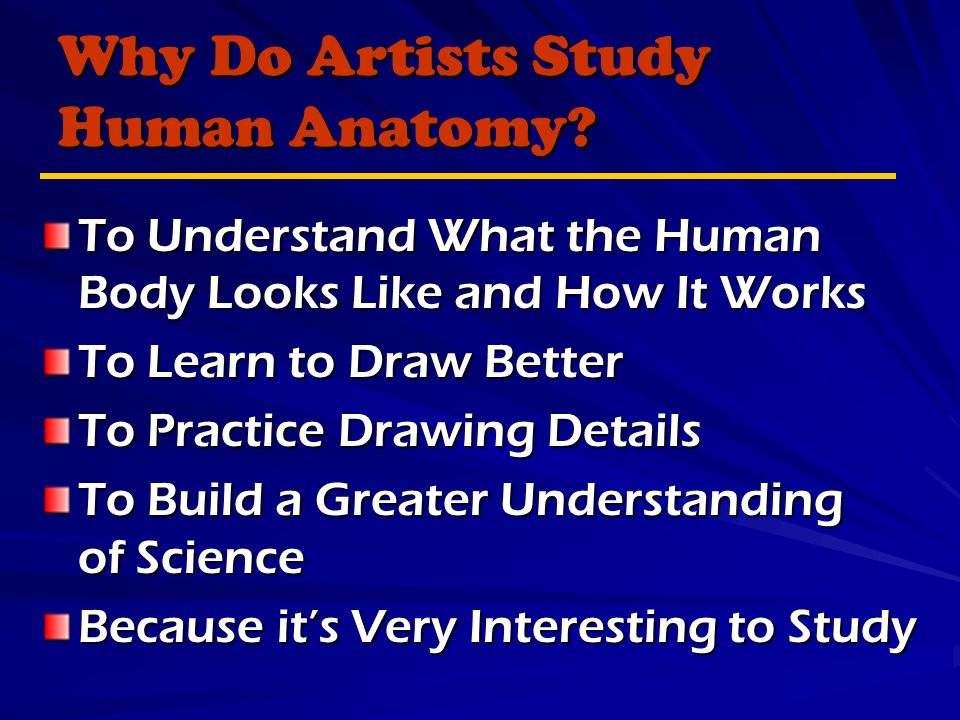 Why Do Artists Study Human Anatomy.