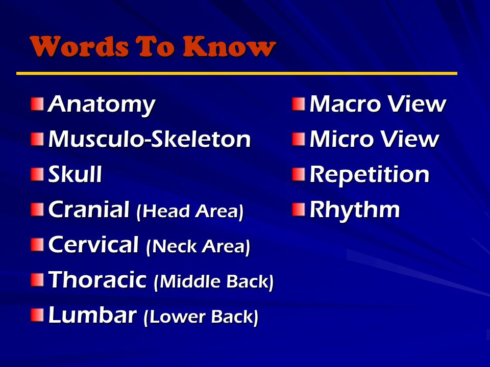 Words To Know AnatomyMusculo-SkeletonSkull Cranial (Head Area) Cervical (Neck Area) Thoracic (Middle Back) Lumbar (Lower Back) Macro View Micro View RepetitionRhythm