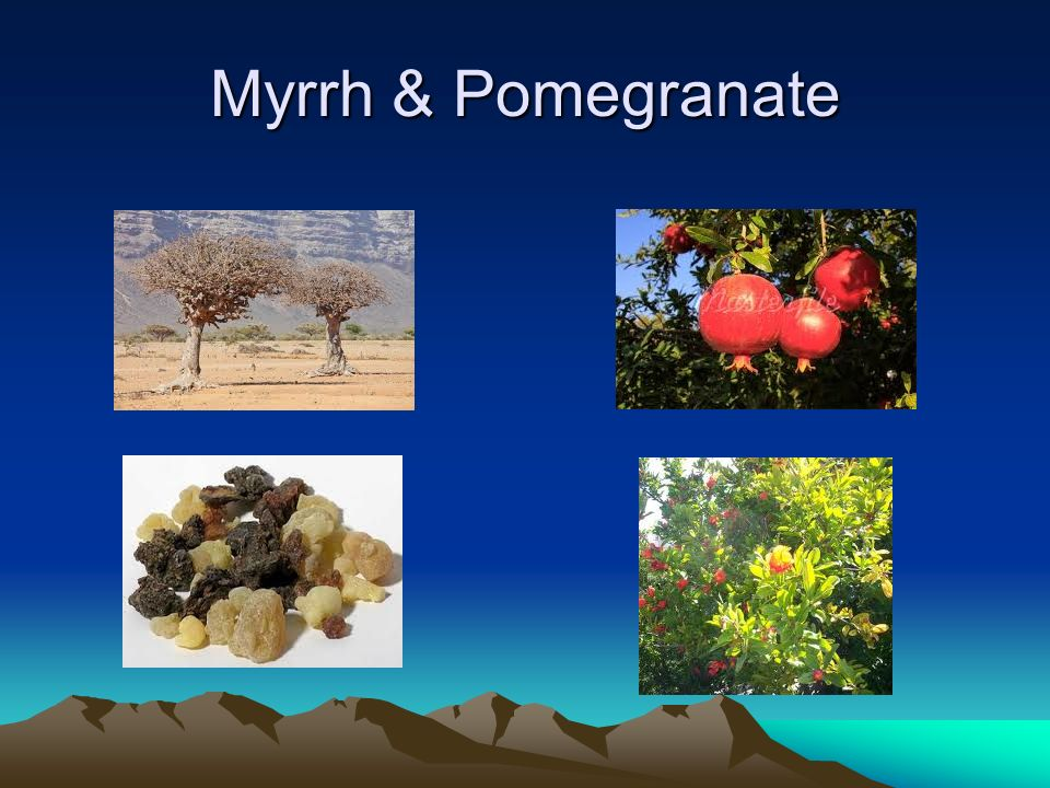 Coleus & Fig Tree