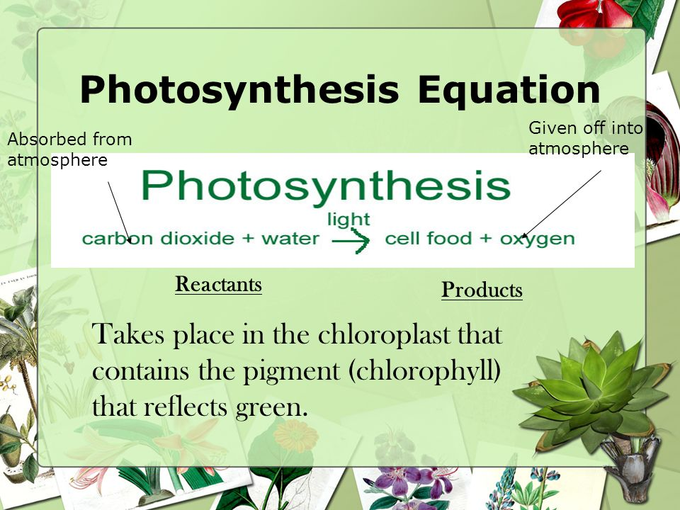 Photosynthesis Food making process in plants that uses sunlight. –Food that plants make is sucrose (sugar)