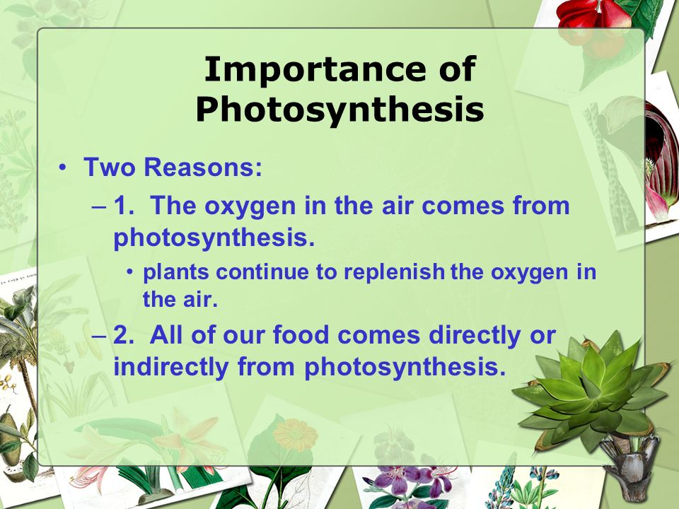Photosynthesis Equation Products Reactants Takes place in the chloroplast that contains the pigment (chlorophyll) that reflects green. Absorbed from a