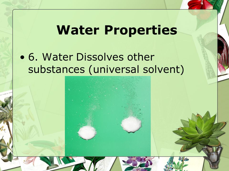 Properties of Water 5. Turgor Pressure: pressure exerted on the cell wall of a plant when the vacuole is filled with water. –Causes the plant to stand