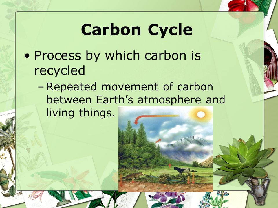Carbon Cycle Living things are made up of organic compounds –Contain Carbon Carbon that is found in atmosphere is CO 2(carbon dioxide)